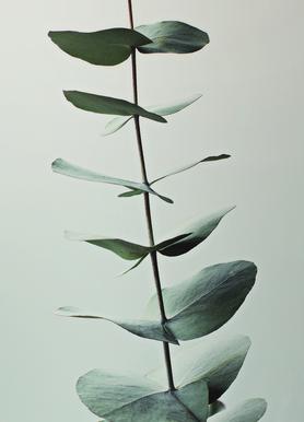 Eucalyptus Green Canvas print