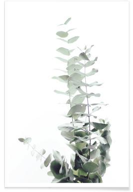 Eucalyptus White 2 -Poster