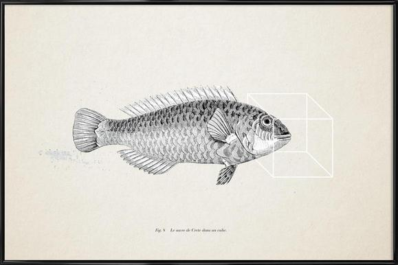 Fish#2 Framed Poster