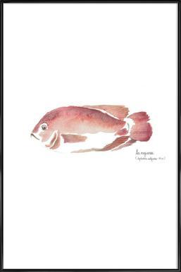 La Mojarra Roja ( red crappie) Framed Poster