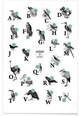 alphabet of birds, animal ABC Poster