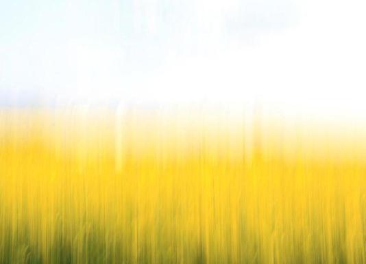 fields of gold 99 as poster by steffi louis juniqe