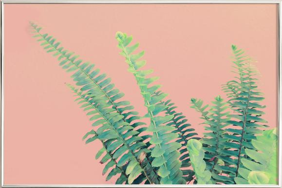 Ferns on Blush Prints poster in aluminium lijst