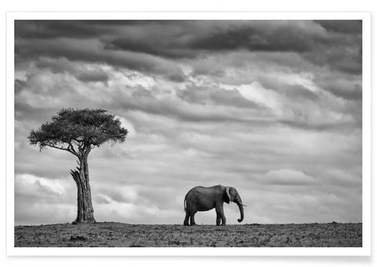 Elephant Landscape - Mario Moreno Affiche