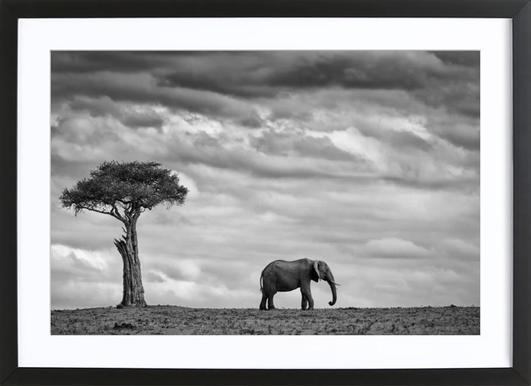 elephant landscape mario moreno 1x affiche sous cadre en bois - Cadre Elephant