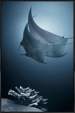Sonata - Andrey Narchuk -Bild mit Kunststoffrahmen