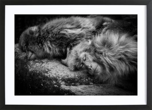 Sleeping - Akihiro Shibata Framed Print