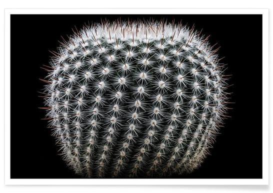 Notocactus Scopa - Victor Mozqueda Poster