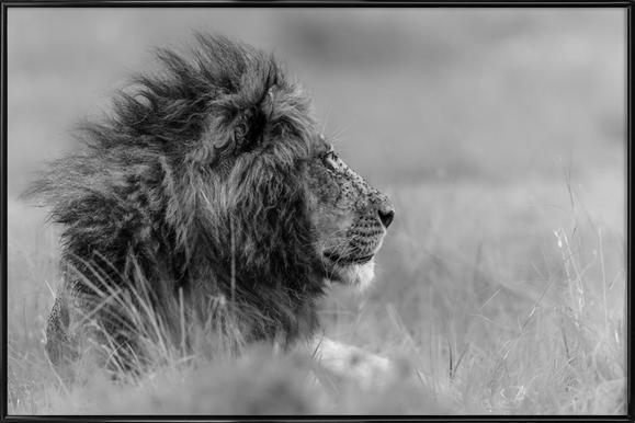 The King Is Alone - Massimo Mei -Bild mit Kunststoffrahmen