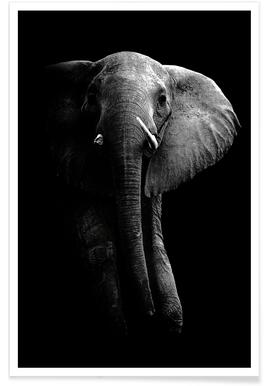 Elephant - Wild Photo Art Poster