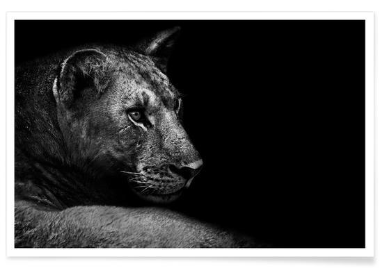Lion - Wild Photo Art -Poster
