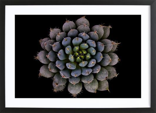 Echeveria Setosa Var. Deminuta - Victor Mozqueda ingelijste print