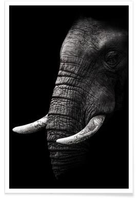 Portrait - Wild Photo Art poster