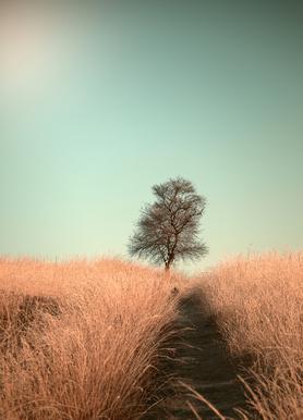 Grass and Path - Jaap Van den Canvas Print