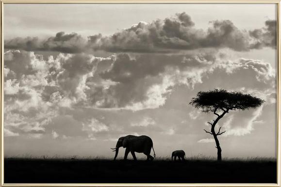 silhouettes of mara mario moreno 1x affiche sous cadre en aluminium - Cadre Elephant