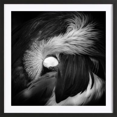 Grey Crowned Crane - Giovanni Casini Framed Print