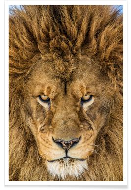 Serious Lion - Mike Centioli -Poster