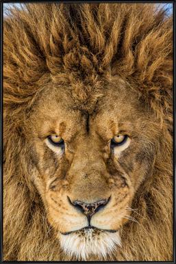 Serious Lion - Mike Centioli -Bild mit Kunststoffrahmen
