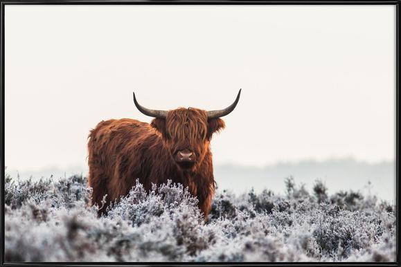 Highlander - Jaap Van Den -Bild mit Kunststoffrahmen