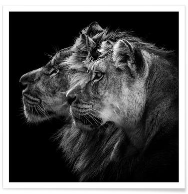 Lion And  Lioness Pt - Laurent Lothare Dambreville -Poster