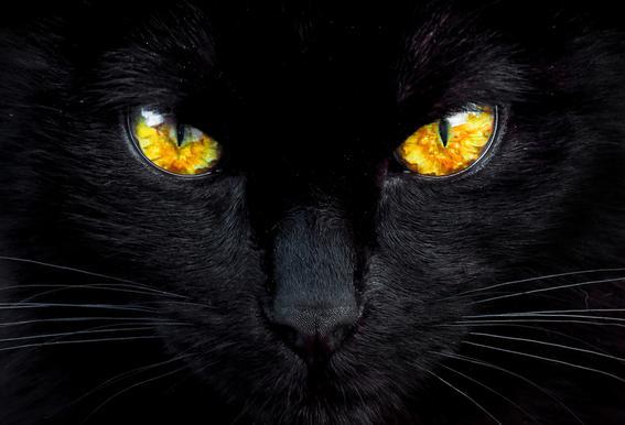 The Hypnotist of the Night -Acrylglasbild