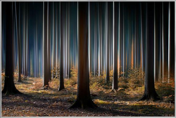 Mystic Wood Poster im Alurahmen