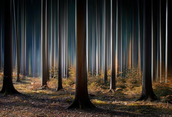 Mystic Wood Acrylglasbild