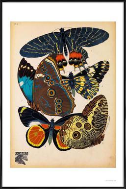 Butterflies Plate 10, E.A. Seguy Framed Poster