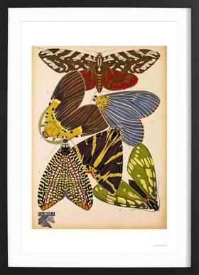 Butterflies Plate 5, E.A. Seguy Poster in houten lijst