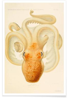 Octopus - Die Cephalopod - 1915 - Plate 76 Poster