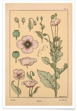 Eugene Grasset - Poppy 04 affiche