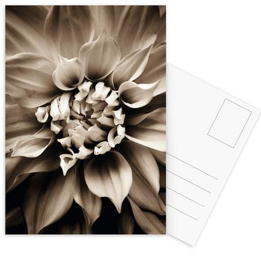 Flower III Postcard Set