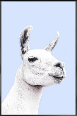 Blue Llama II affiche encadrée