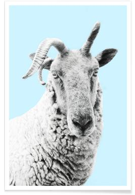 Blue Sheep affiche