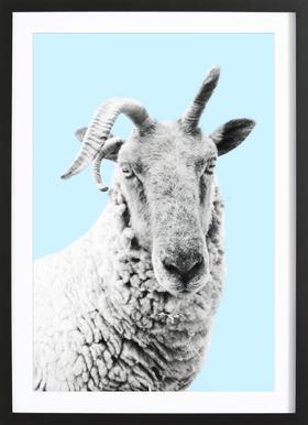 Blue Sheep affiche sous cadre en bois