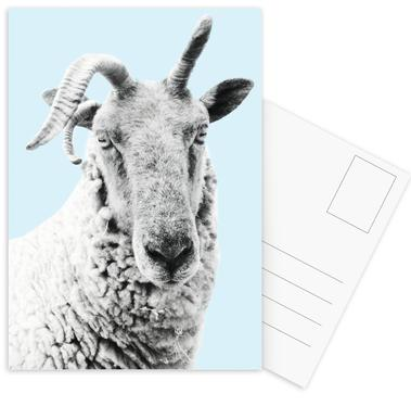 Blue Sheep cartes postales