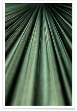 Green Palm affiche