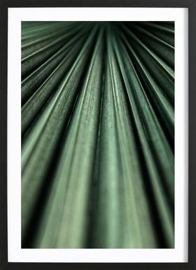 Green Palm affiche sous cadre en bois