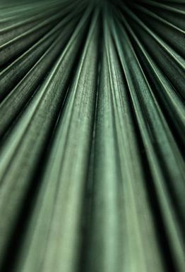 Green Palm tableau en verre
