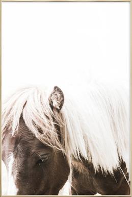 Horse II affiche sous cadre en aluminium