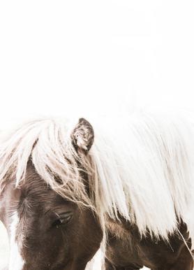 Horse II toile