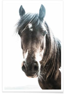 Horse affiche