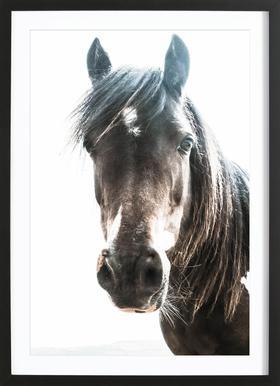Horse affiche sous cadre en bois