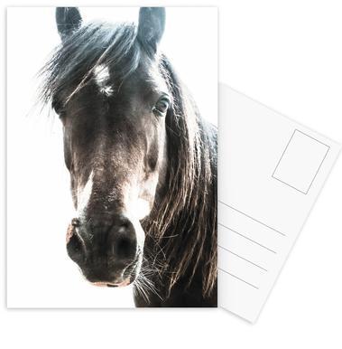 Horse cartes postales