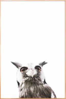 Lil Owl affiche sous cadre en aluminium