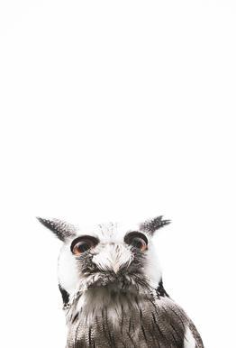 Lil Owl tableau en verre