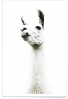 Llama I affiche