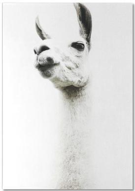 Llama I bloc-notes