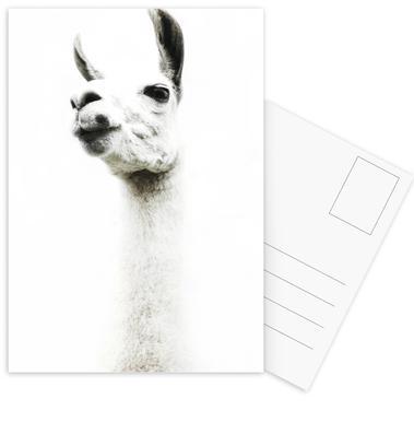 Llama I cartes postales