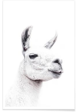 Llama II affiche